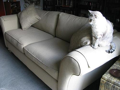 Sofa scratcher