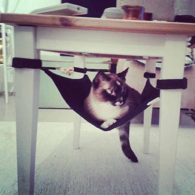 cat crib cat hammock
