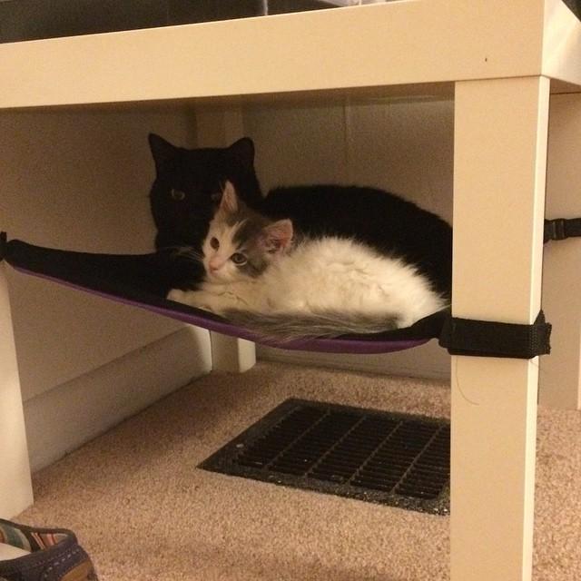@foster_the_kitties