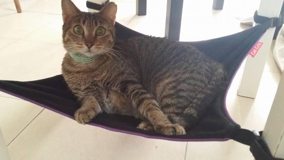 Cat Crib cat hammock big eyes