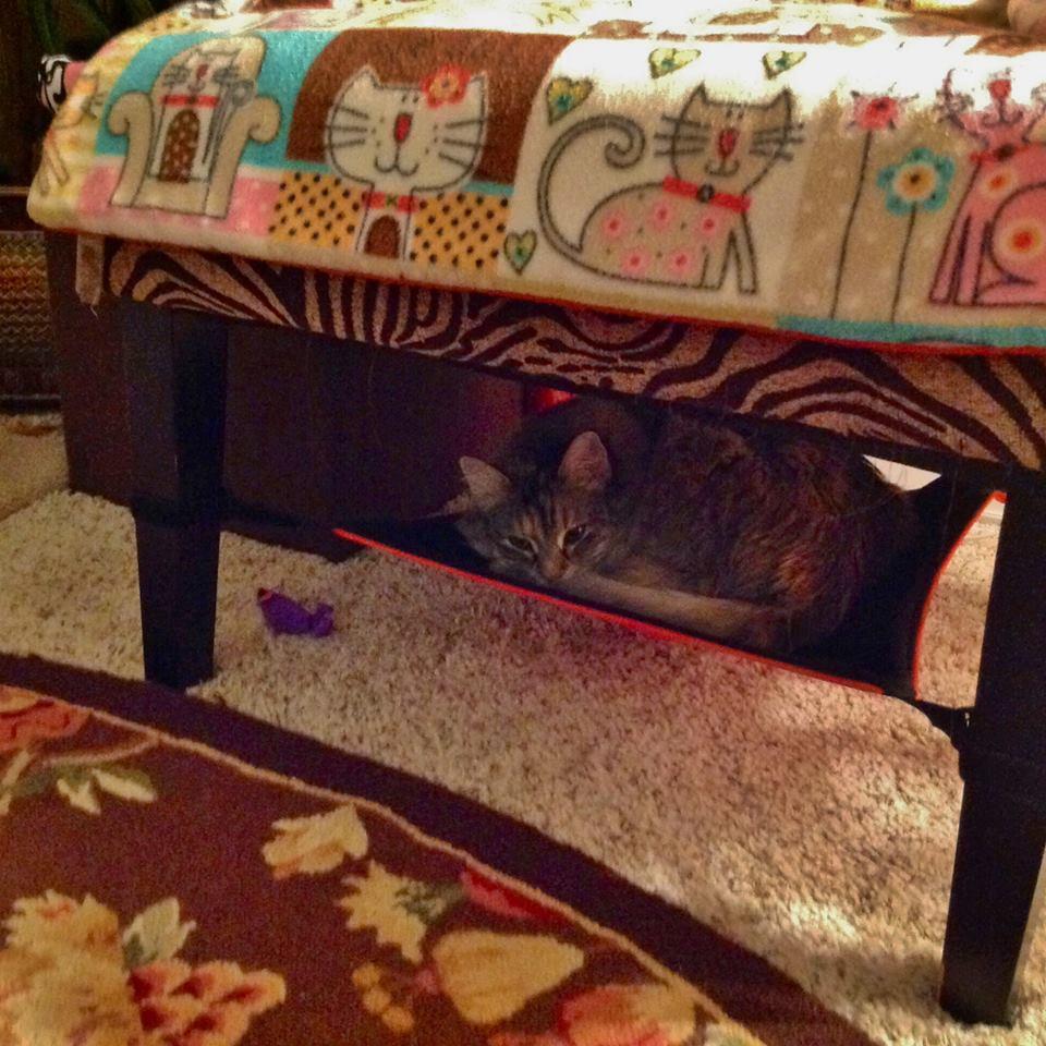 Cat Crib cat hammock hideout