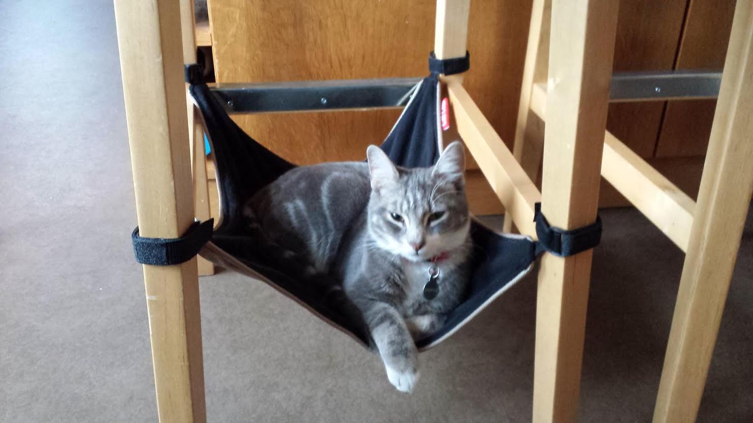 Cat hammock ...