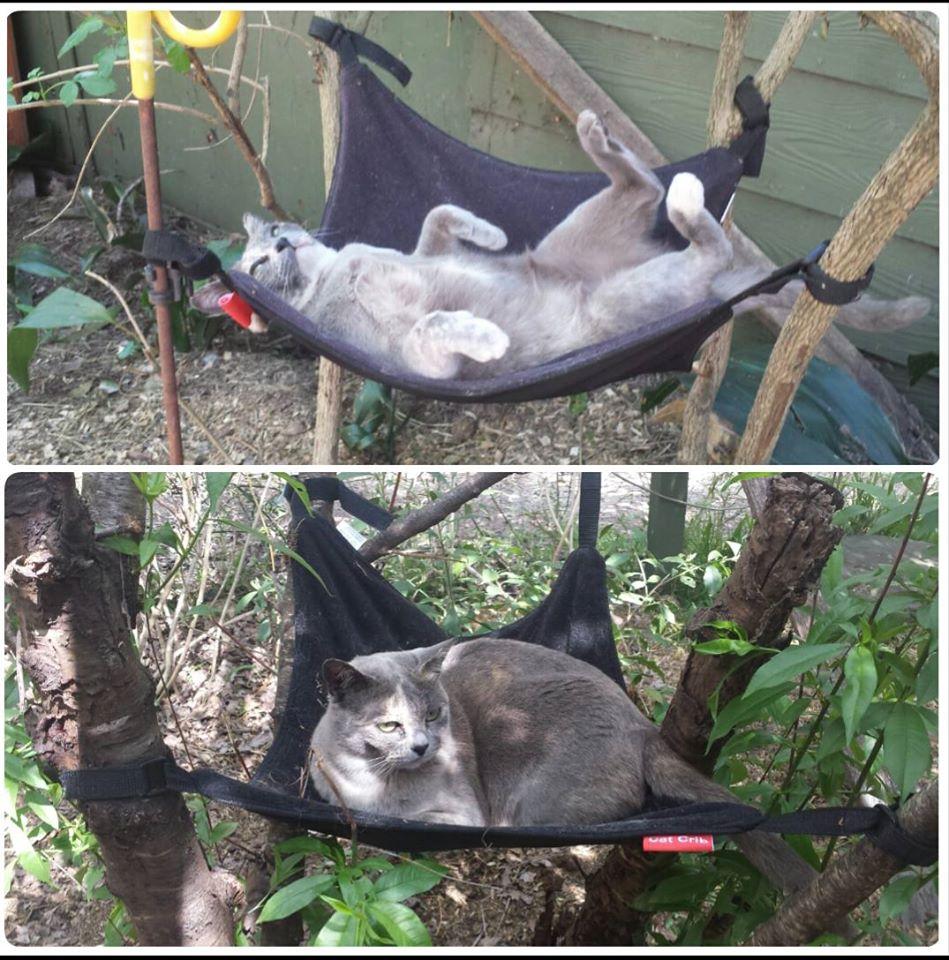 New style cat hammock