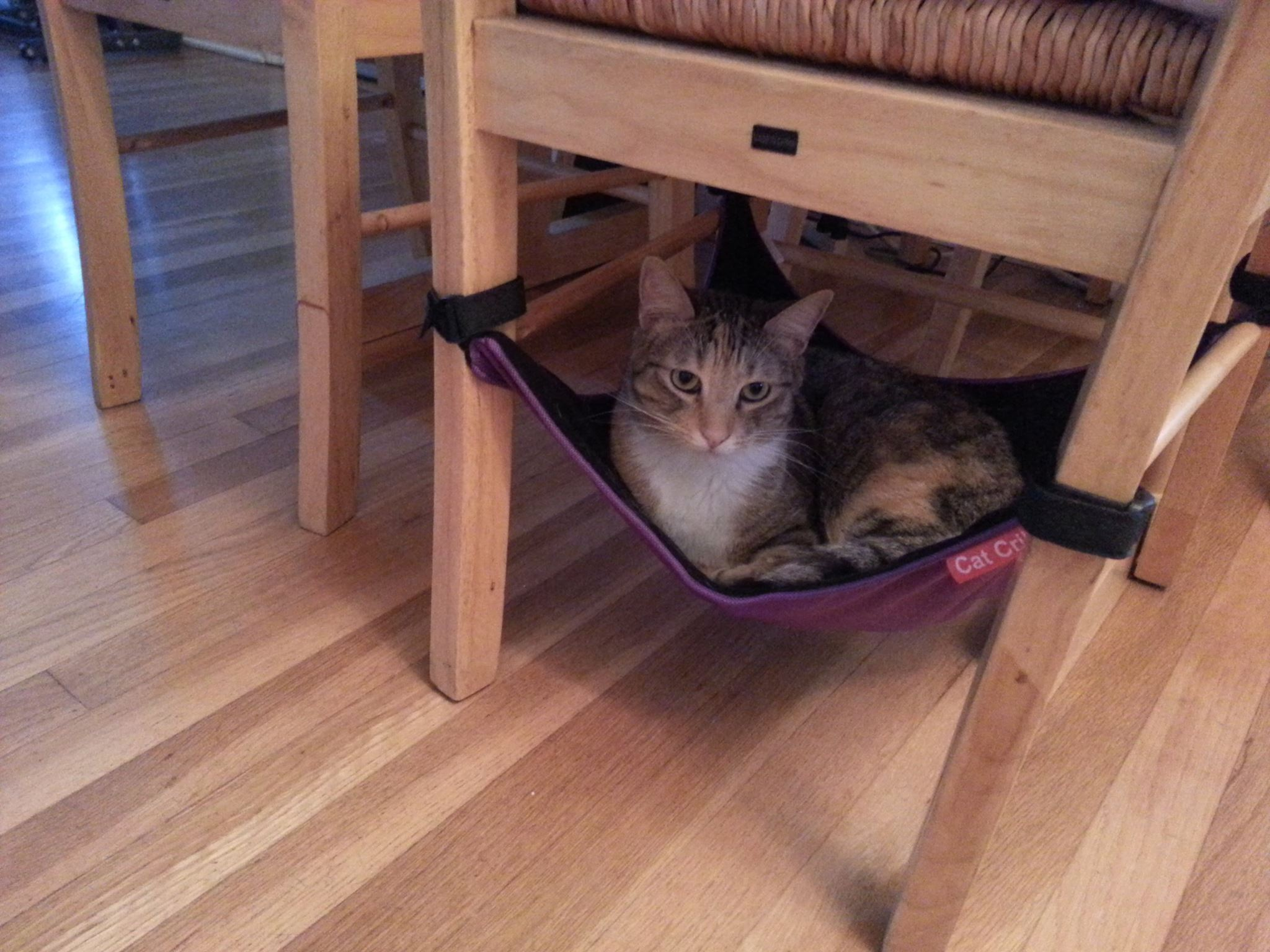Cat Crib Cat Hammock The Best Bed For Your Kitties To Sleep